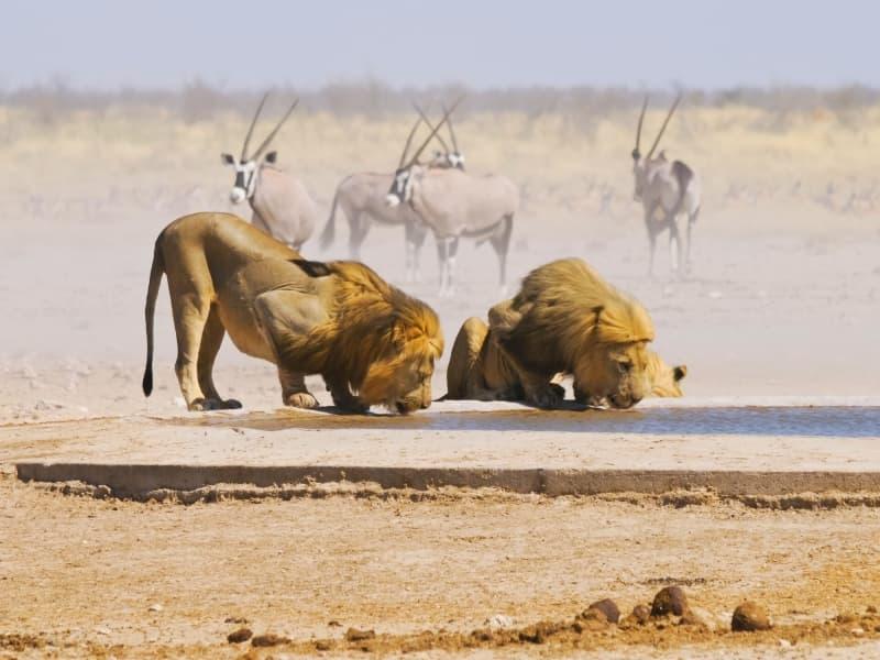 La faune sauvage en Namibie
